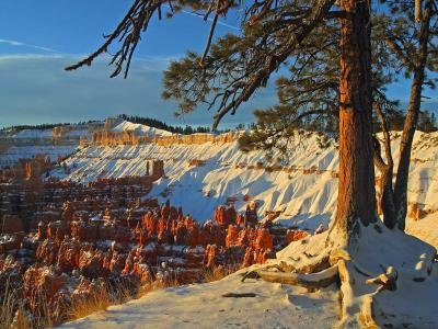 Download free tree landscape snow rock image