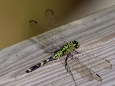 Download free dragonfly insect animal image