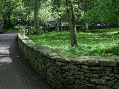 Download free tree path stone image