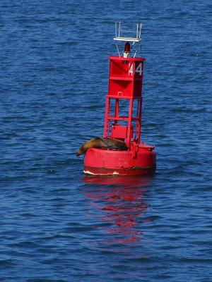 Download free red sea water buoy seal image