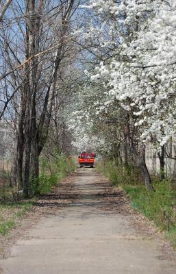 Download free tree car path image