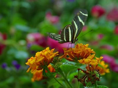 Download free insect animal flower butterfly image