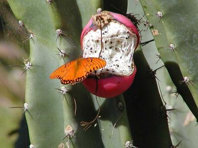 Download free insect animal cactus plant butterfly image