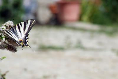 Download free insect animal butterfly image