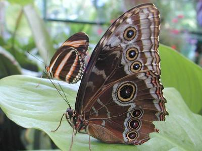 Download free insect leaf animal butterfly image