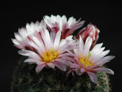 Download free flower cactus plant image
