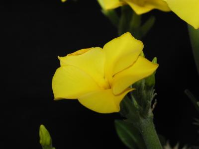 Download free flower yellow plant image