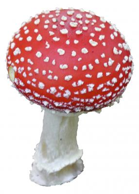 Download free red mushroom white image