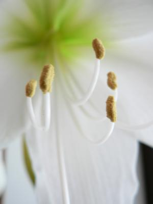 Download free flower white petal image