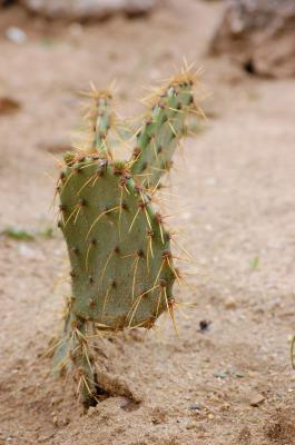 Download free cactus sand plant image