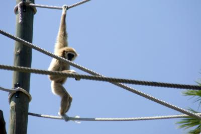 Download free animal monkey image
