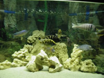 Download free fish sand aquarium image
