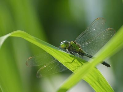 Download free dragonfly insect leaf image