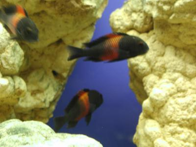 Download free animal fish stone aquarium image