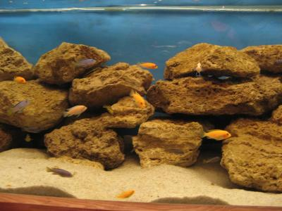 Download free fish water sand stone aquarium image