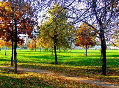 Download free tree leaf landscape grass park image