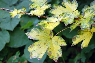 Download free leaf yellow green image