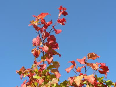 Download free leaf red blue sky image