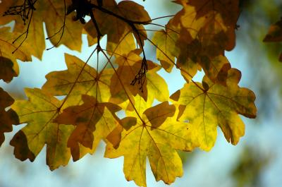 Download free leaf yellow image