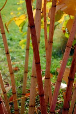Download free tree plant bamboo image