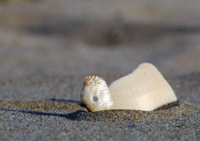Download free sand shell image