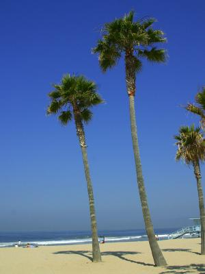 Download free tree blue beach sky image