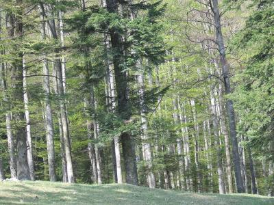 Download free forest tree image