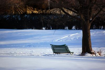 Download free tree snow bench image