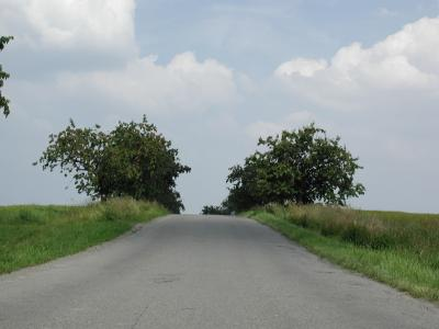 Download free tree road image