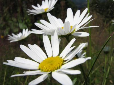 Download free flower yellow white image