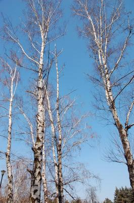 Download free forest tree blue sky image
