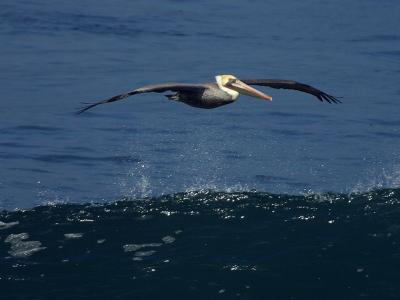 Download free animal sea water bird image