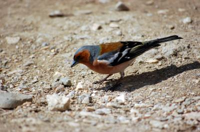 Download free animal sand stone bird image