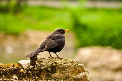 Download free animal stone bird rock image