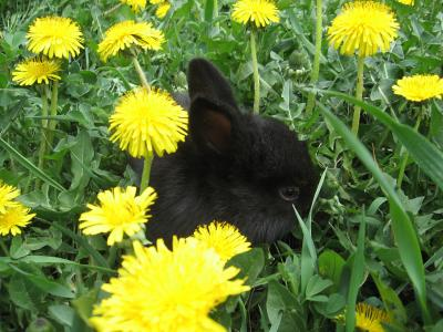Download free animal flower grass rabbit image