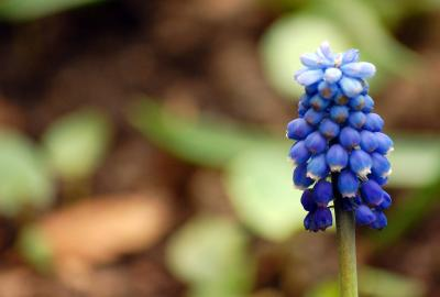Download free blue plant image