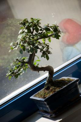 Download free tree plant window image