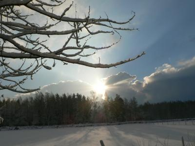 Download free forest tree sky snow image